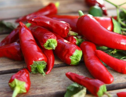 18 year old started a thriving business with an idea… and some chillies.